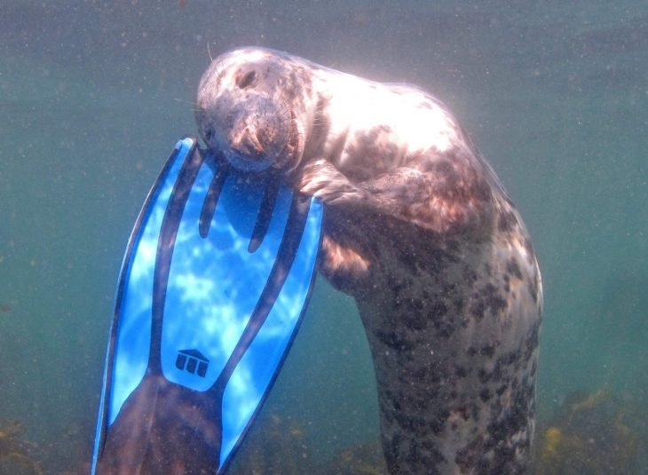 foca abraza tabla de surf