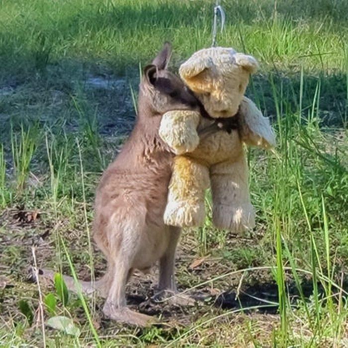 canguro abraza peluche