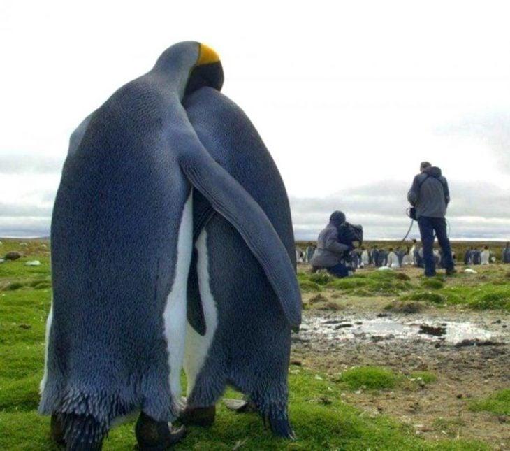 pingüinos abrazo