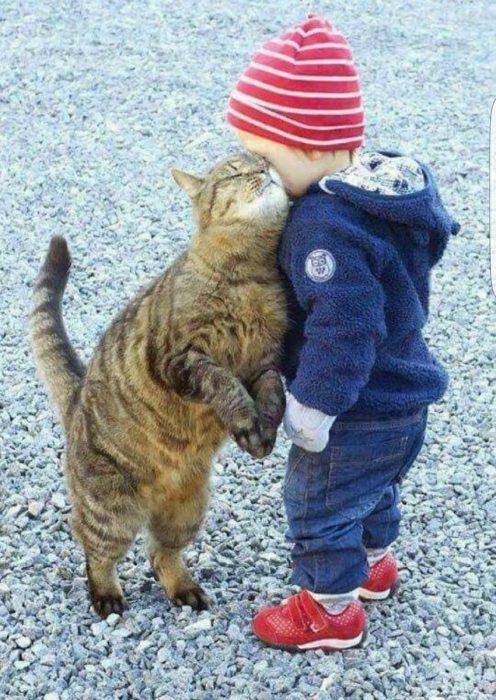 gato abraza a niño