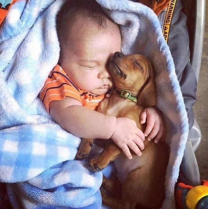 perro bebé