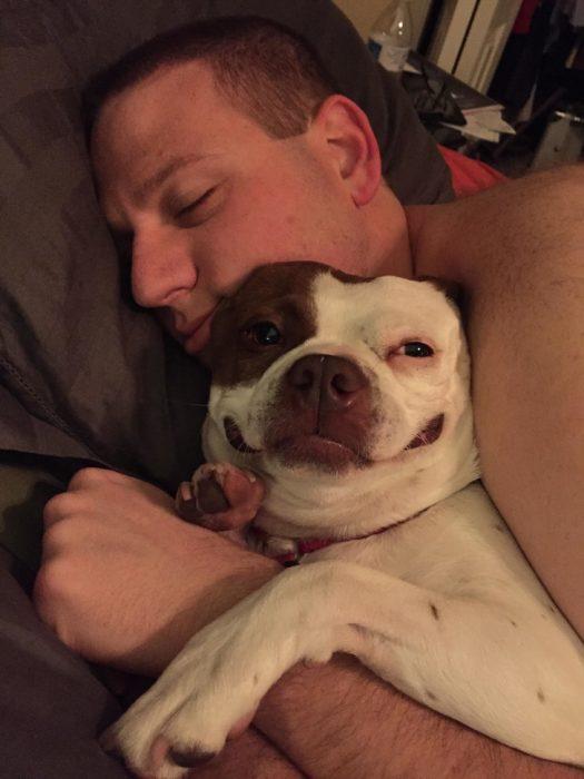 perro contento