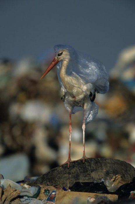 pelícano con una bolsa de plástico