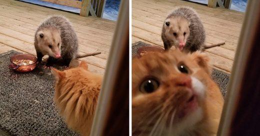 Cover Este gato hambriento se quedó sin comida, no creerás por qué