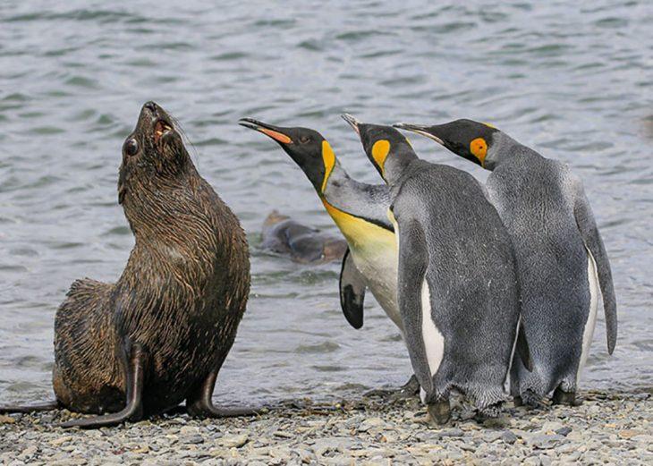 morsa y pingüinos