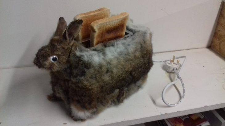 tostadora de conejo