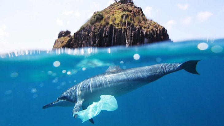 delfín con una bolsa de basura