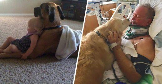 Cover el amor de un perro es incondicional