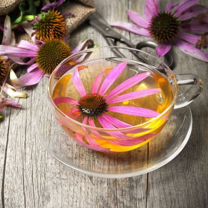 té de flor de equinácea