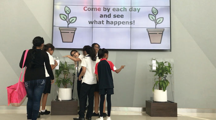 Ikea experimento bullying plantas