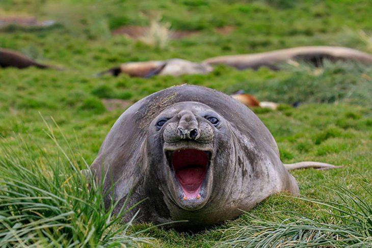 animal marino riéndo