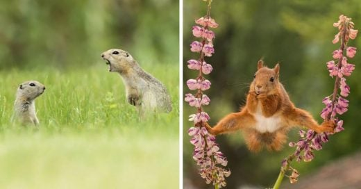 Cover Fotos de Comedy Wildlife Photo Awards 2018