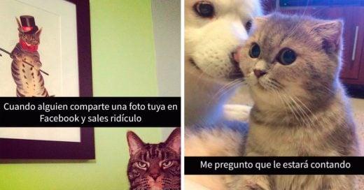 Cover snapchat de gatos que mejorarán tu día por completo