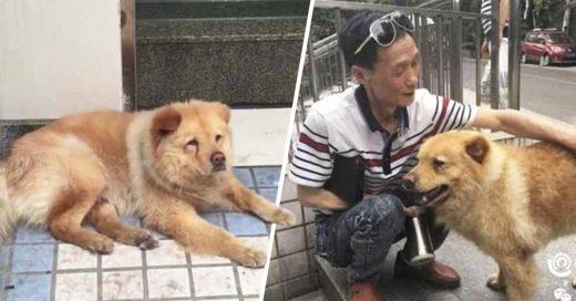 Cover Perro espera a su dueño por 12 horas en estación de tren