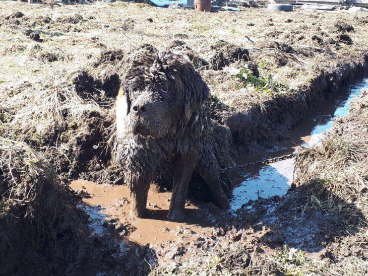 perrito lleno de fango