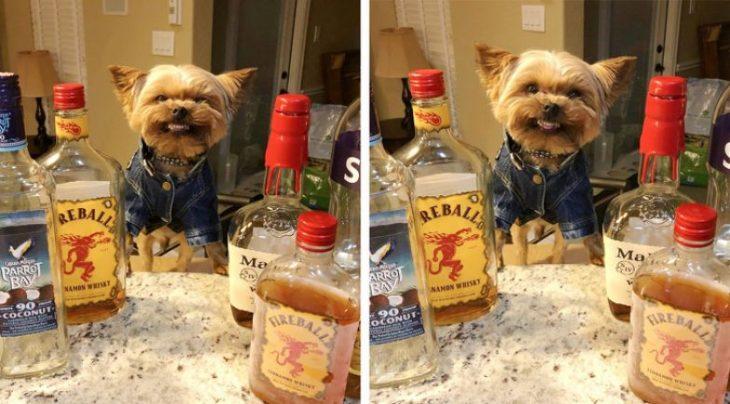 perrito realmente feliz