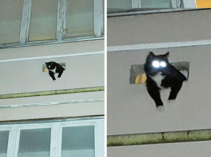 gato con ojos brillantes