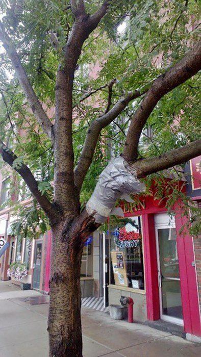 árbol con cinta para pegar su rama