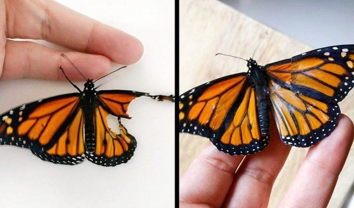 mariposa con ala reconstruida