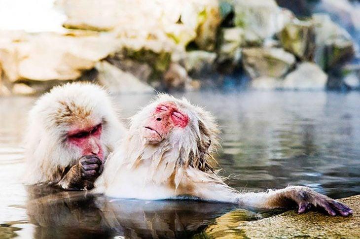 dos monitos en el agua