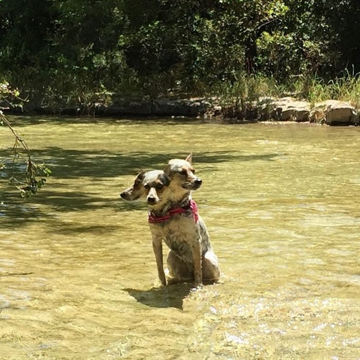 foto fallida panorámica de perrito con bandana