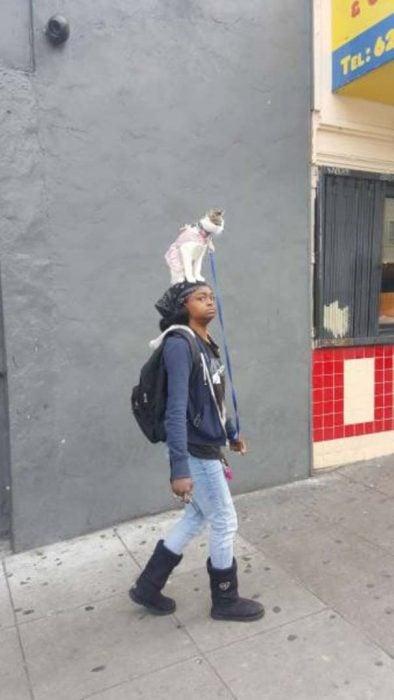 mujer con gato en la cabeza