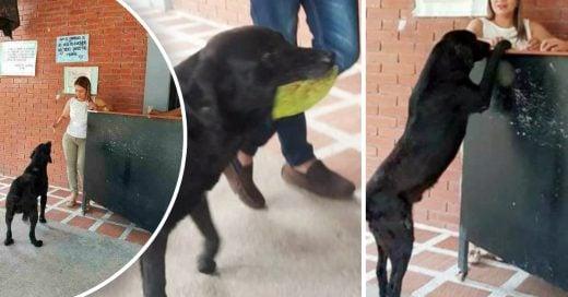 Cover Este perrito es el orgullo de su raza y paga todos los días por su comida