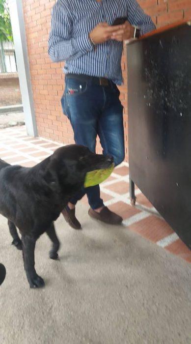 negro perrito inteligente