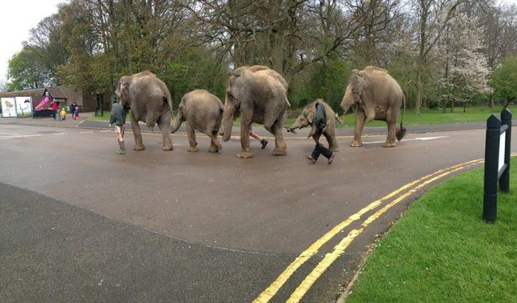 foto fallida panorámica de elefantes