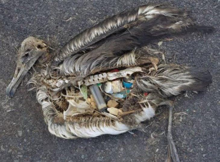 pelícano con basura