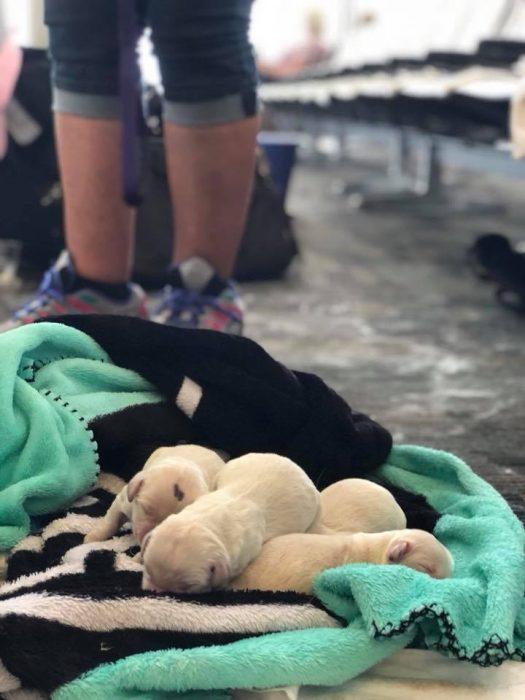 perritos bebé