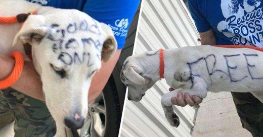 Cover perro abandonado con un mensaje escrito en su cuerpo