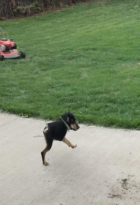foto fallida panorámica de perro