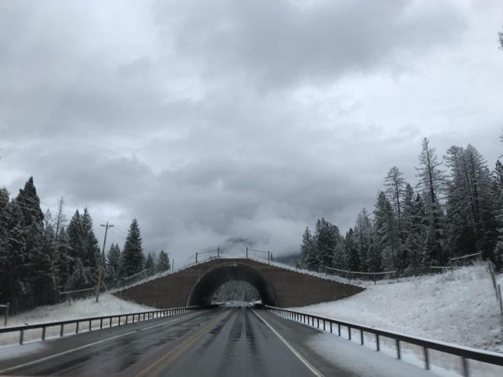 Puente de cruce para animales