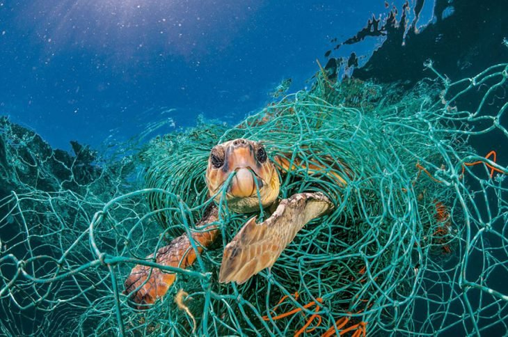 tortuga enredada en hilos de plástico
