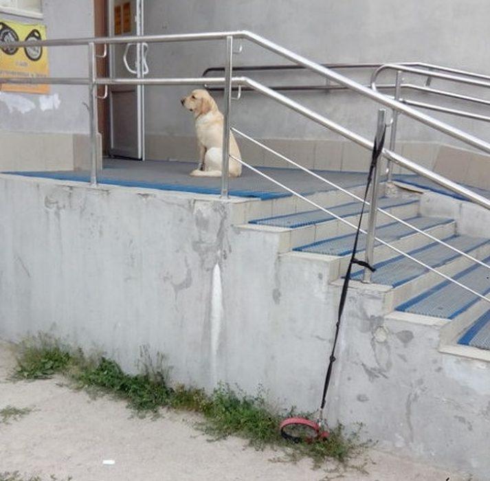 Perros que te conquistarán con sus travesuras