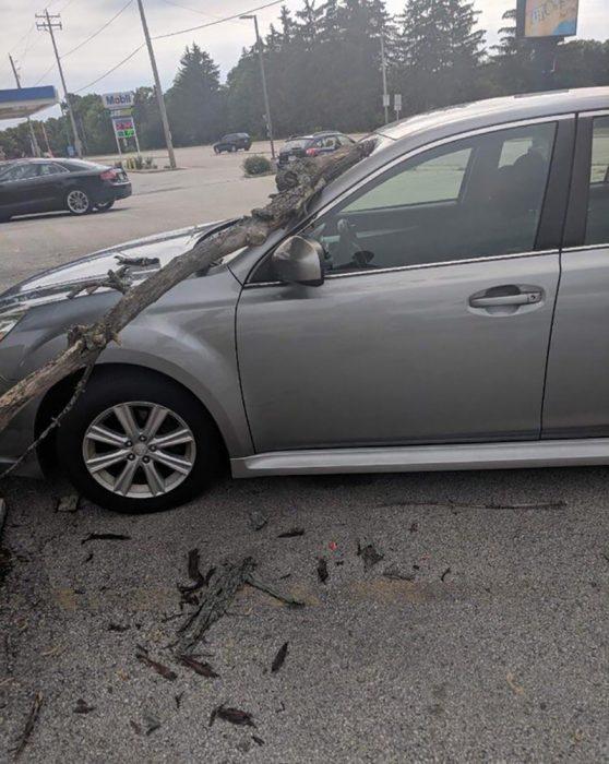 carro al que se le cayó un árbol