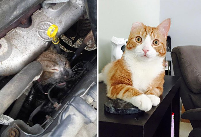 Antes y después gatitos rescatados