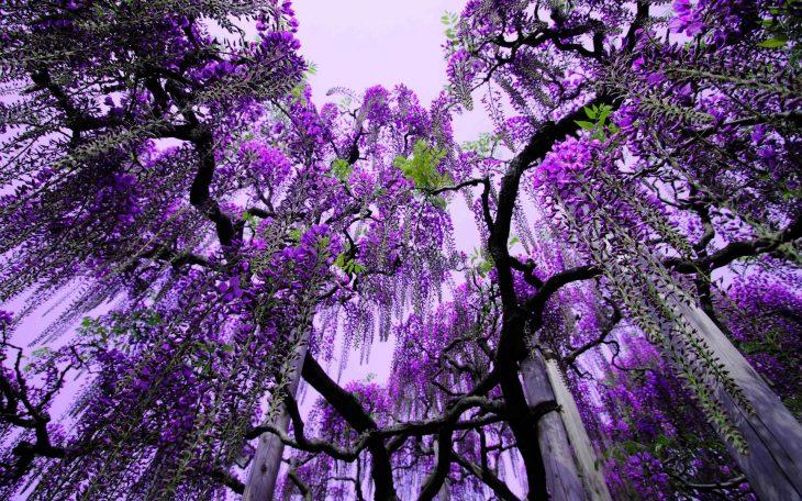 Parque de flores - Ashikaga, Japón
