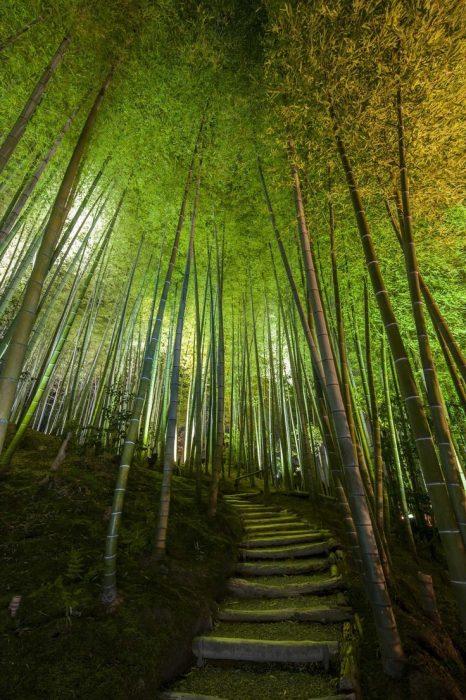 Bosque de bambú, Kioto, Japón