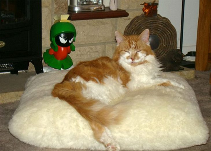Gato cumplió 30 años Recreo Viral