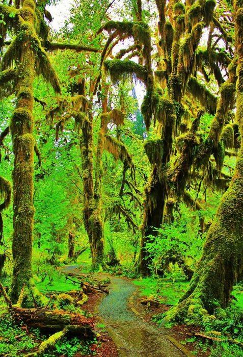 Salón de Los Musgos, Parque Nacional, Washington