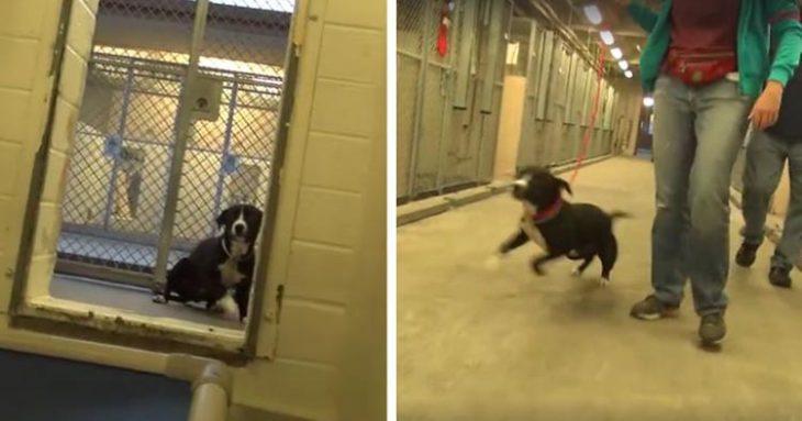Perrito se emociona al ser adoptado