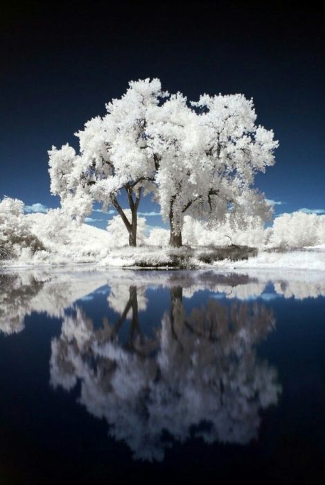 Árbol blanco, Telatyn, Polonia