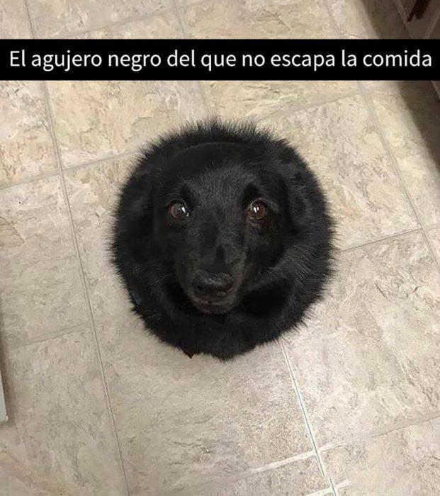 perrito bolita negra