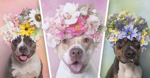 Cover Fotógrafa intenta salvar las vidas de perritos pit bull