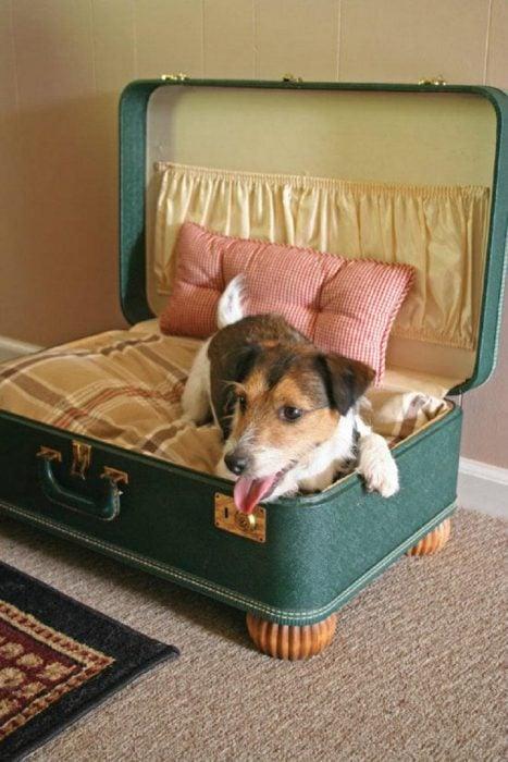 perrito tiene como cama una valija vieja