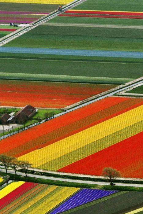Campos de flores, Amsterdam, Países Bajos