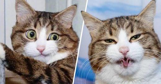 Cover gato con divertidas expresiones faciales