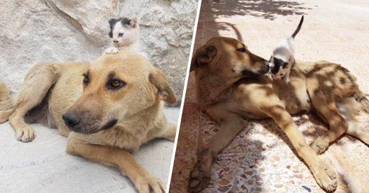 Cover Gatito y perro abandonados se convierten en mejore amigos